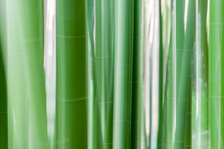 Trebah Garden Bambus