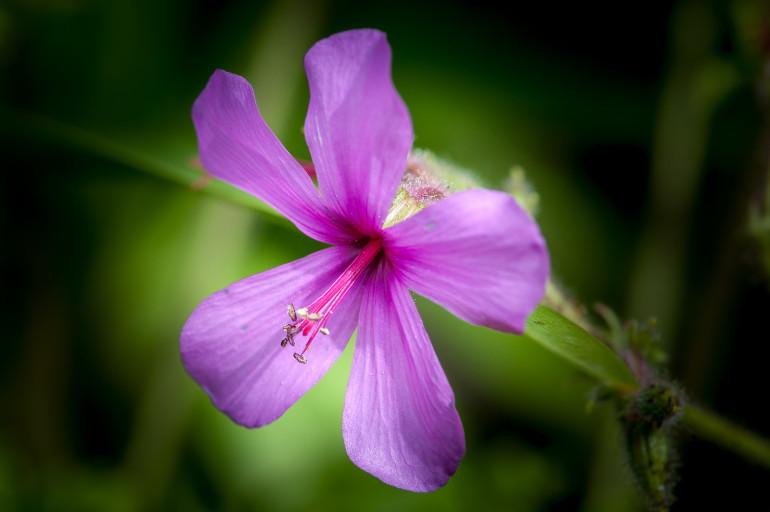 Trebah Garden flower