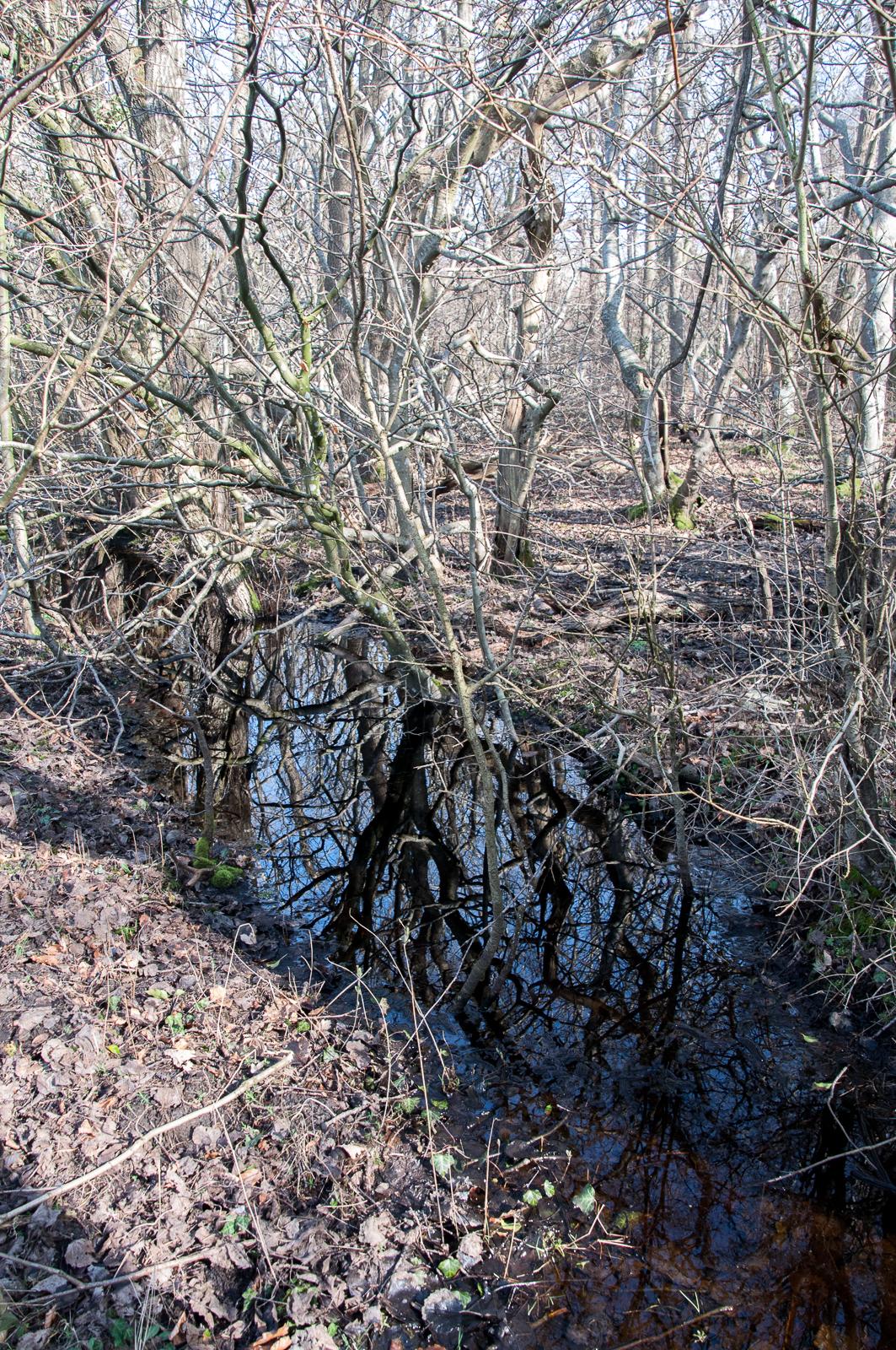 Draved Skov kaos