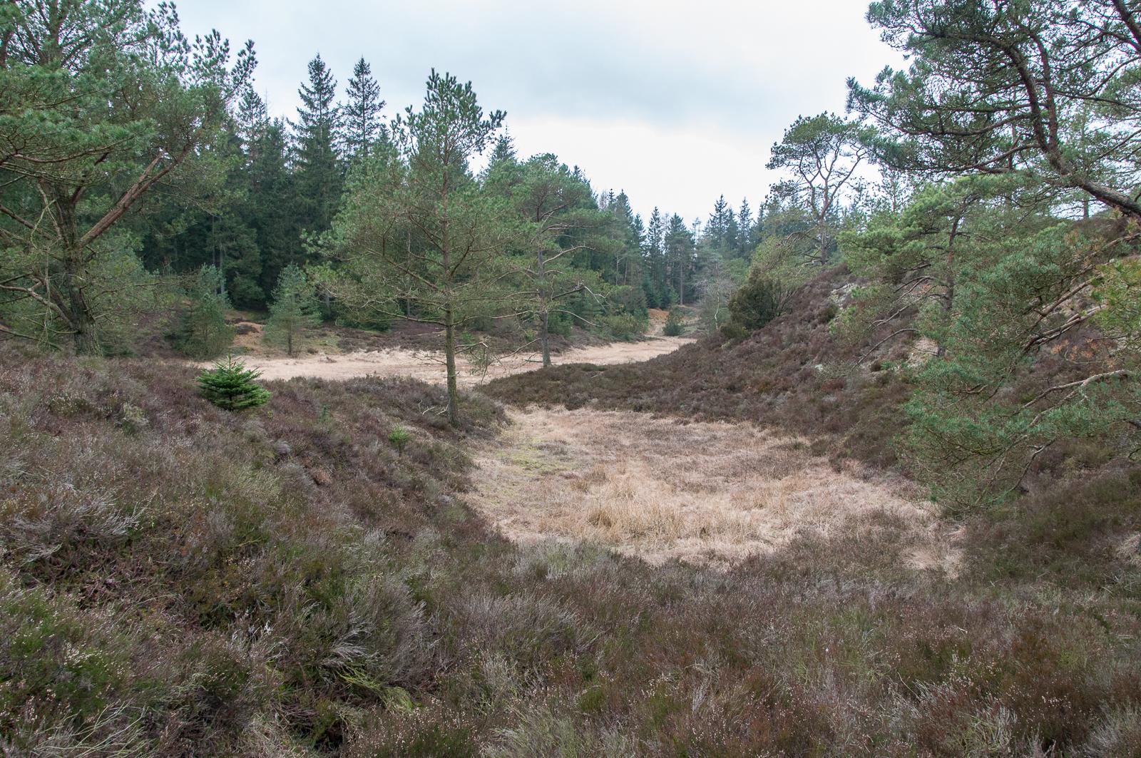 Frederikshåb Plantage dal