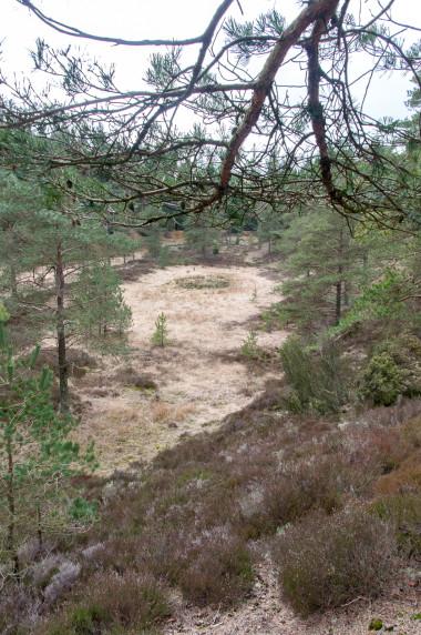 Frederikshåb Plantage oase