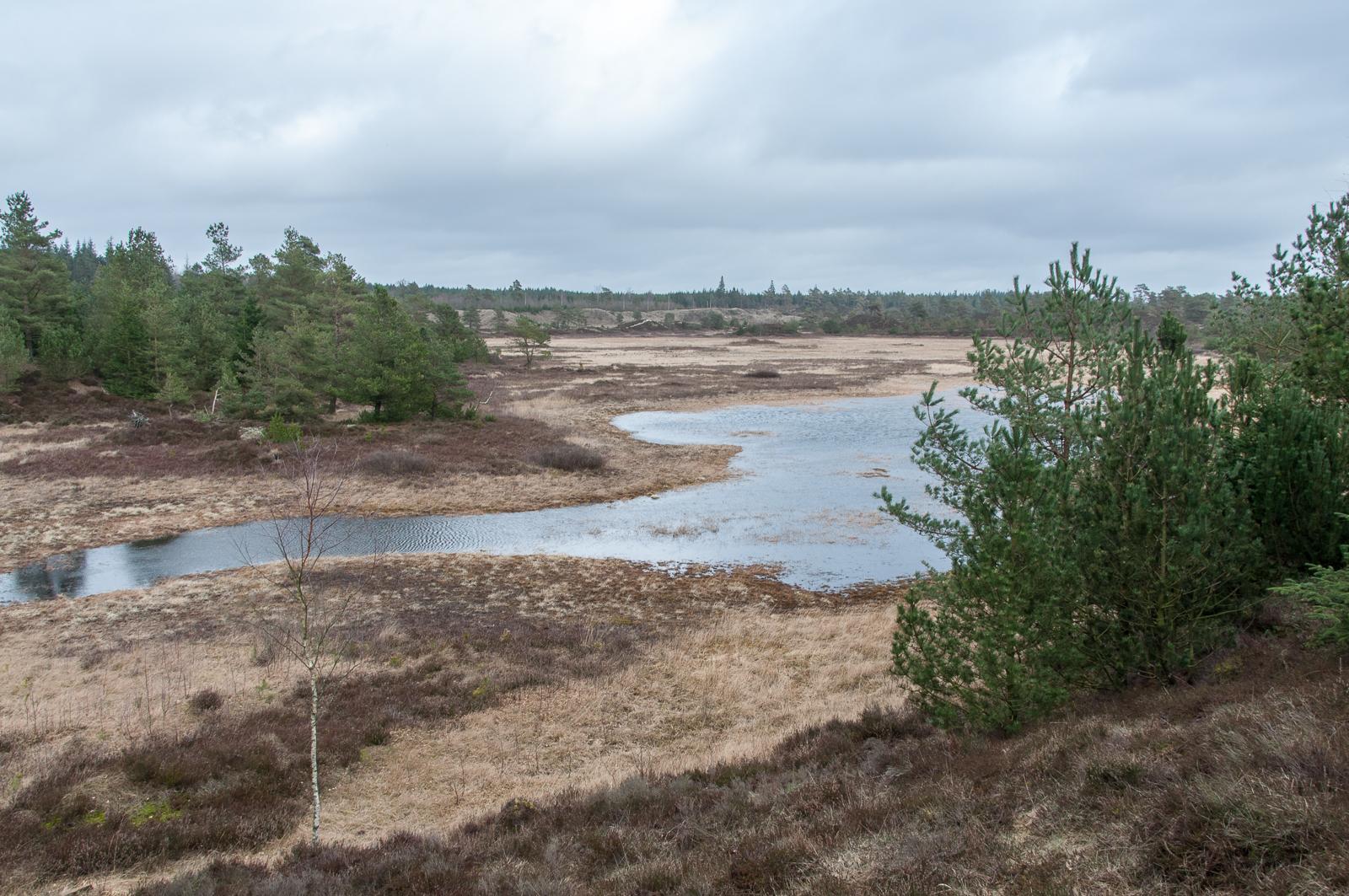 Frederikshåb Plantage savannen