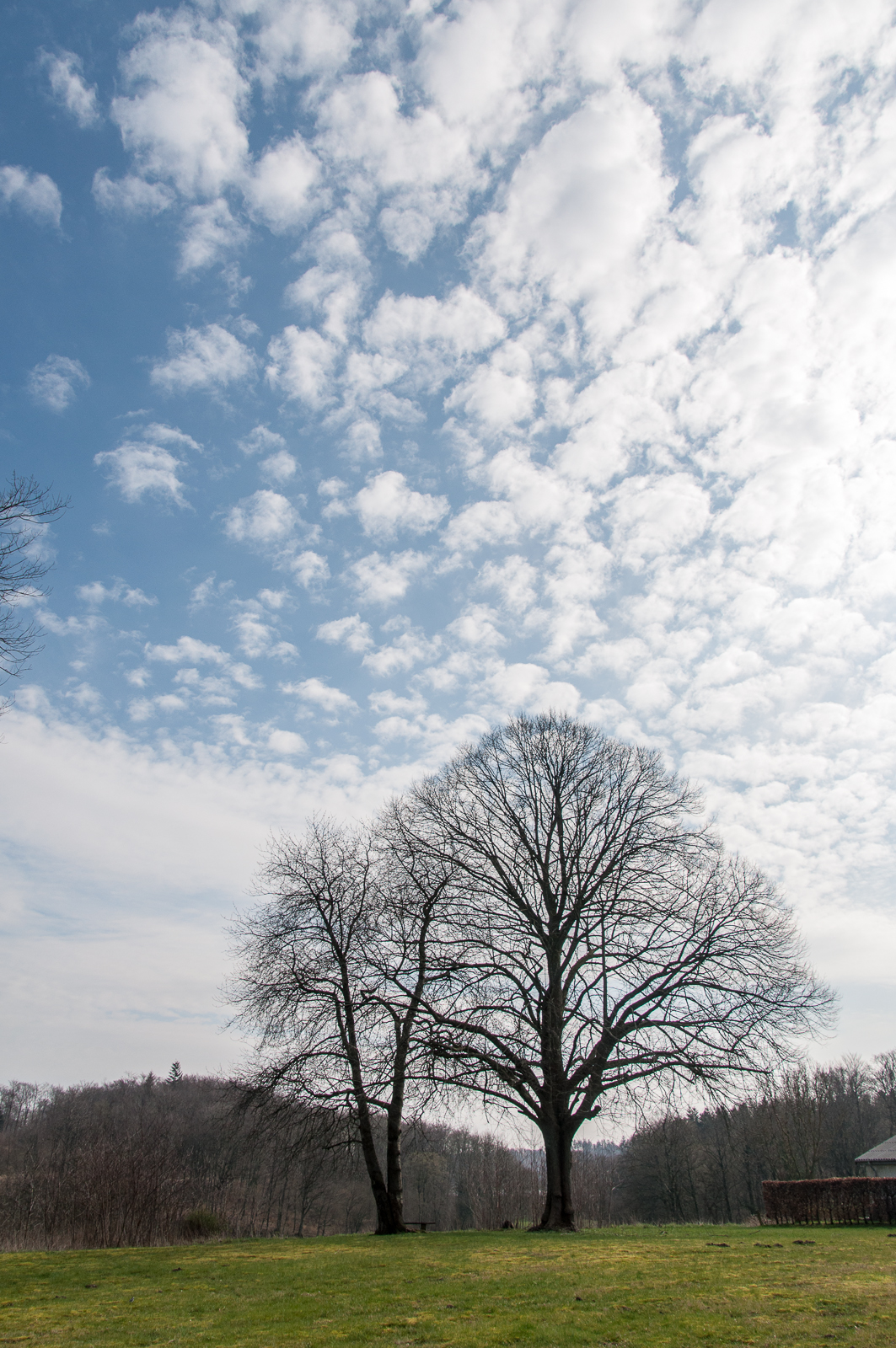 Træ og skyer