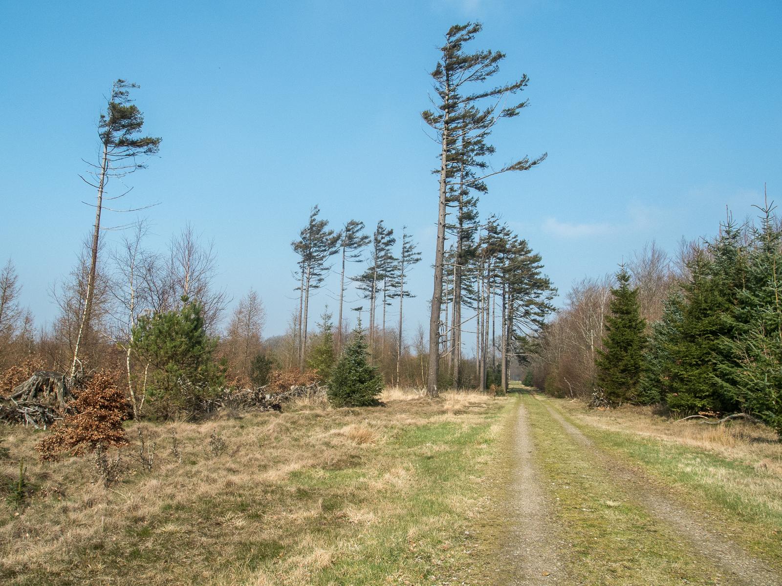 Vestenvind Lindet Skov