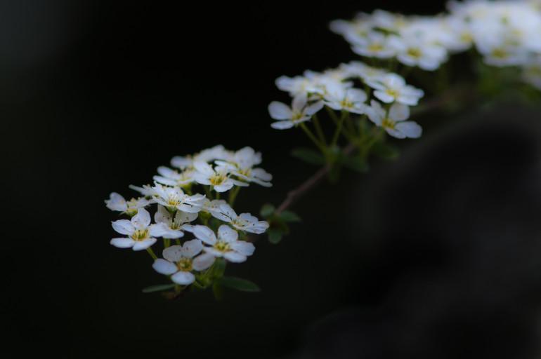 Blomster i mørket