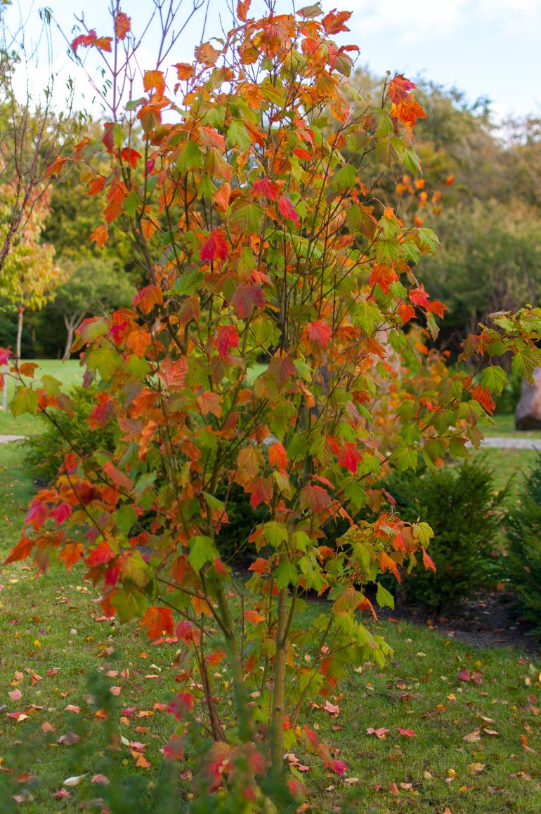 Efterårets komme