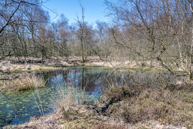 Vejen Mose lille sø-013
