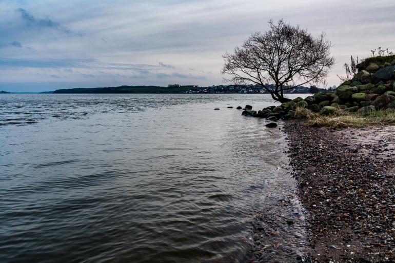 Træ i vandskorpen