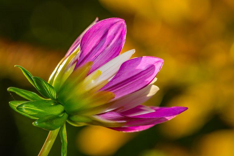 stadig-blomster-i-kolding